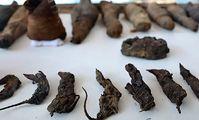 В Египте нашли гробницу с мумиями птиц и животных