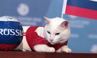 Кот-оракул Ахилл предсказал результаты матча Россия — Египет