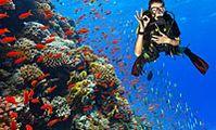 """Египетские власти оштрафовали дайвинг-фирму за """"убийство"""" коралловых рифов"""