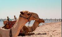 Египту хорошо и без российских туристов. Стоит ли верить местным властям?