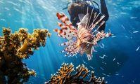 Не кормить рыб, не ломать кораллы и меньше нырять с аквалангом. В Египте ужесточили правила для туристов