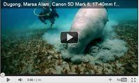 Видео. Морская корова. Египет