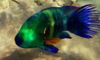 Фотоотчет с рыбалки в Красном море