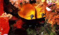 Коралловые рифы в Красном море