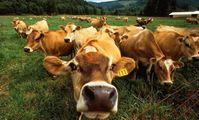 Украина и Египет обсудили вопросы экспорта украинской говядины