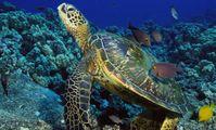 температура воды в Красном море на глубине ныряния,