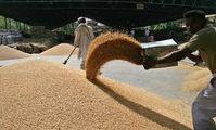 Египет планирует собирать два урожая пшеницы в год