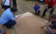 Египет официально подтвердил отсутствие претензий относительно качества российской пшеницы