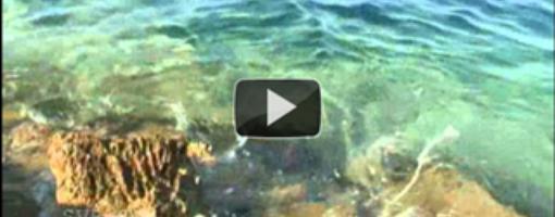 Видеоролики с дикого пляжа