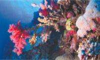 Дайвинг в Красном море, Атлас рыб, мест для ныряния