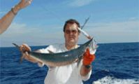 Ваху, 8 кг, Красное море, о.Шедван