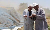 Россельхознадзор направил Египту запрос по поводу претензий к качеству поставляемого зерна