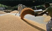 Египет: объемы и темпы внешних закупок пшеницы выше прошлогодних