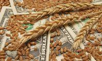 Цена закупки пшеницы у египетских фермеров будет выше мирового уровня