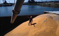 """Каир после отмены """"нулевой спорыньи"""" приобрел на аукционе 240 тыс тонн пшеницы из РФ"""