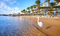 Возобновление рейсов на курорты Египта позволит снизить цены на туры Прогноз: минимальная стоимость турпакетов составит от 35 тысяч рублей