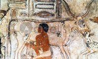 В Египте в ходе раскопок обнаружили сыр возрастом более 3200 лет