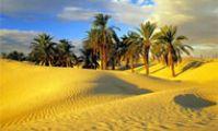Оазисы в Ливийской пустыне Египта