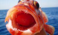 Рыбалка на красном море