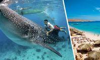 К пляжам Хургады приплыла самая большая акула в мире