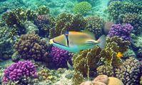 Корал Гарден (Coral Garden)