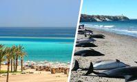 Хургада и Шарм-эль-Шейх вошли в топ-10 лучших направлений TripAdvisor, но без российских туристов