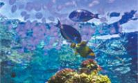 Медузы, Красное море