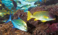 Дайвинг в Судане, атлас рыб Красного моря