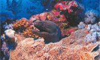 Тауер, мурена, Красное море, каталог рыб красного моря