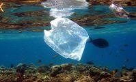 В Египте будет проведена масштабная акция по очистке морского дна.