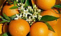 Египет завалит Россию апельсинами