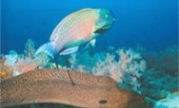 Нир Гарден. Рыба попугай и мурена. Красное море. Рыбы