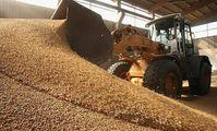 СМИ сообщили об изъятии в Египте 18 тыс. тонн непригодной пшеницы из России