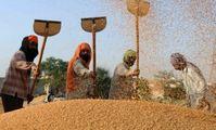 ОАЭ расширяет производство пшеницы в египетской пустыне