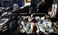 Египет готов поставлять в РФ мясо, молоко и рыбу