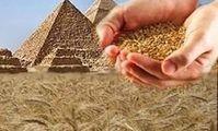 Египет закупит 60 тыс тонн пшеницы из России