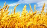 Египет рассматривает возможность инвестирования в Башкирии проектов по переработке зерна