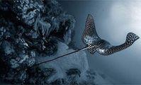 орляк, рыбы красного моря