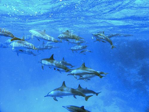 Заповедник рыбалка райский остров